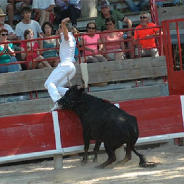 Courses camarguaises nos traditions